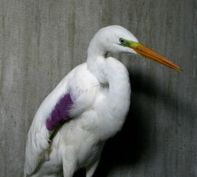 Centre_soins_animaux_sauvages_faune_alsace_lorraine_oiseaux_mammifères_gorna_Strasbourg_basrhin_CUS