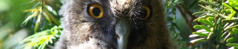 centre_soins_animaux_sauvages_faune_alsace_lorraine_oiseaux_mammifères_gorna_Strasbourg_Bas-Rhin_CUS_écureuil_hérisson_Neuwiller_Saverne