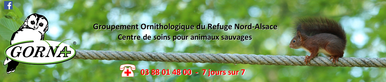 centre_soins_animaux_sauvages_faune_blessé_alsace_lorraine_oiseaux_mammifères_gorna_Strasbourg_Bas-Rhin_écureuil_hérisson_Neuwiller_Saverne