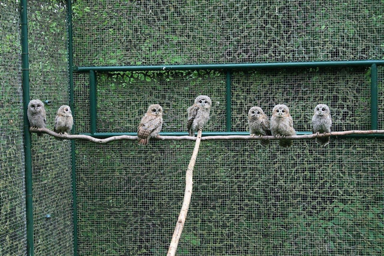 centre_soins_animaux_sauvages_faune_alsace_lorraine_oiseaux_mammifères_gorna_Strasbourg_Bas-Rhin_écureuil_hérisson_Neuwiller_Saverne